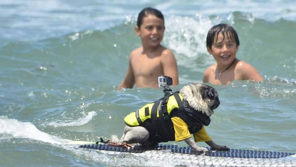 brady and kuli masters of surfing 12 pictures 7