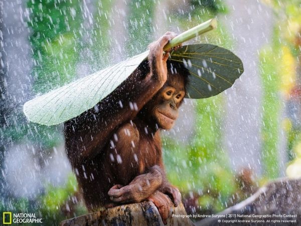 breathtaking compilation of national geographic photos 10 pictures 1