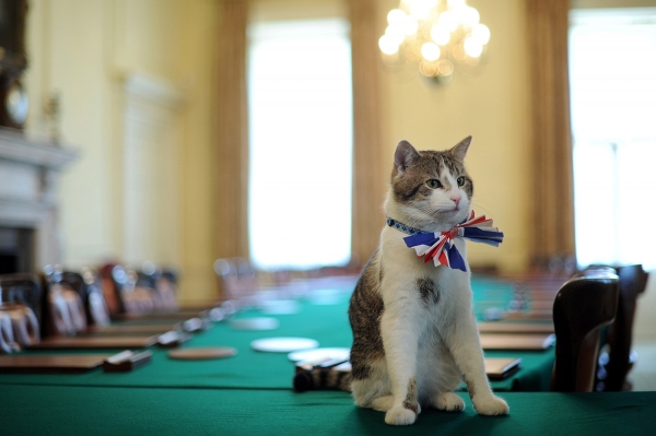 britains cutest chief mousers 14 pictures 1