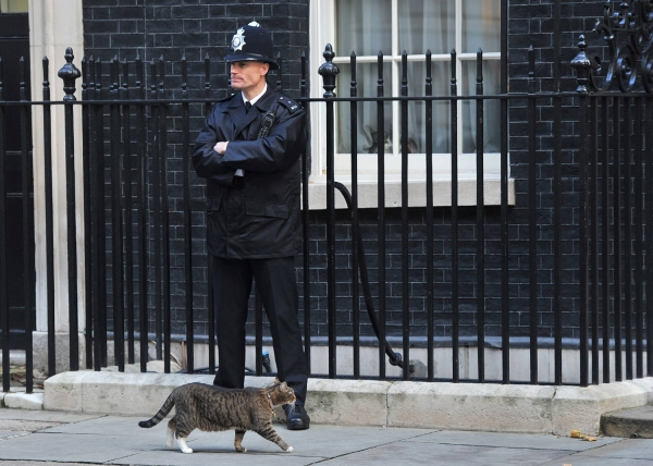 britains cutest chief mousers 14 pictures 10
