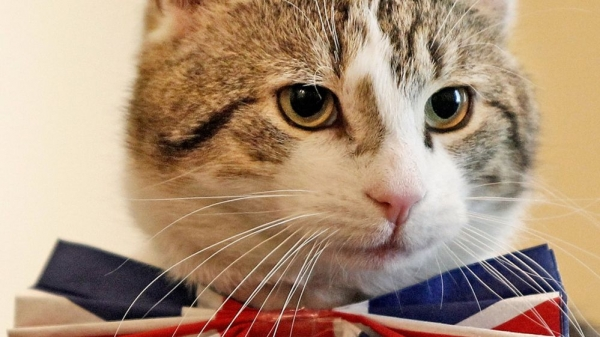 britains cutest chief mousers 14 pictures 11