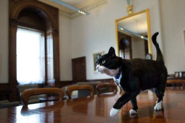 britains cutest chief mousers 14 pictures 14