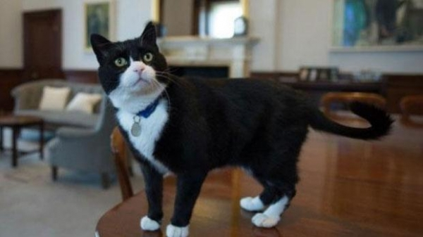 britains cutest chief mousers 14 pictures 2