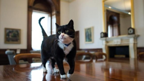 britains cutest chief mousers 14 pictures 3