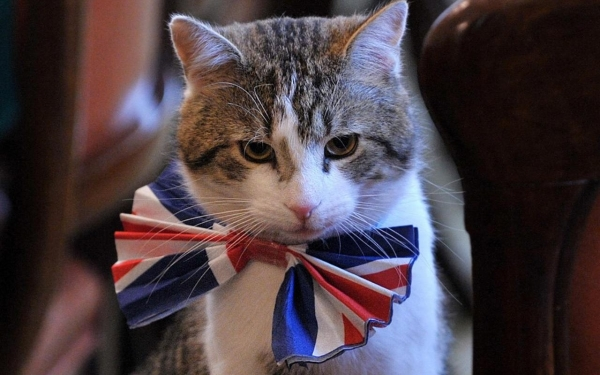 britains cutest chief mousers 14 pictures 4