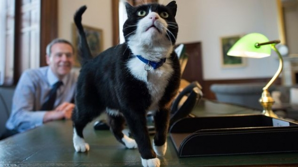 britains cutest chief mousers 14 pictures 5