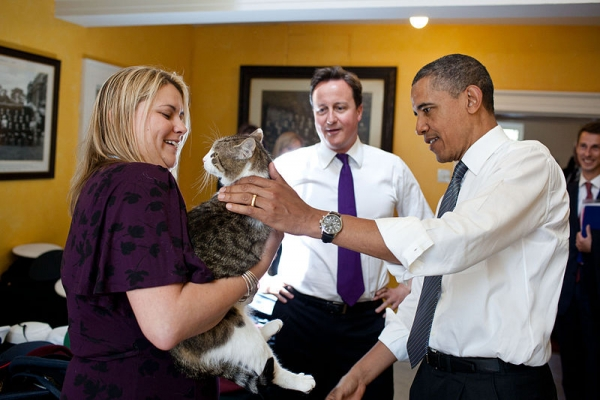 britains cutest chief mousers 14 pictures 6