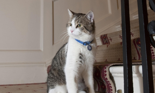 britains cutest chief mousers 14 pictures 8