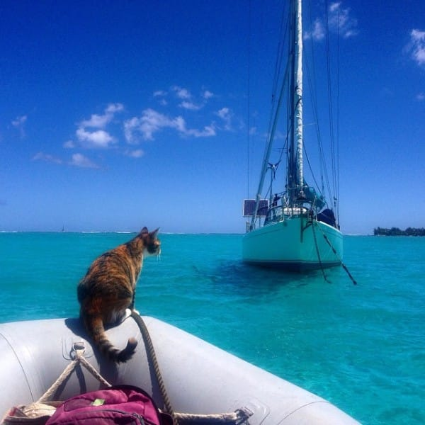captain lizzy and her cat companion 13 pictures 6