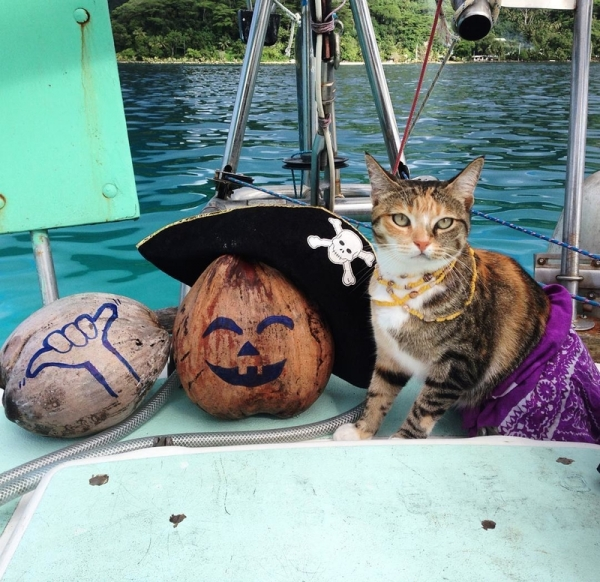 captain lizzy and her cat companion 13 pictures 7