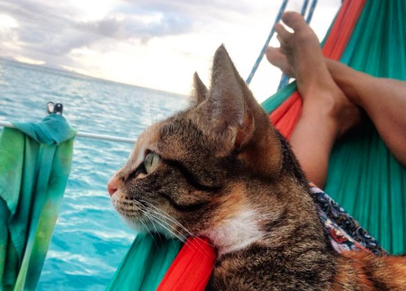 captain lizzy and her cat companion 13 pictures 9