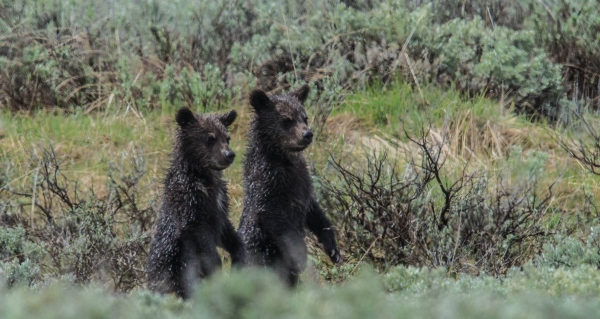 capturing the nature welcome to the yellowstone national park with angela bohlke 10 pictures 4