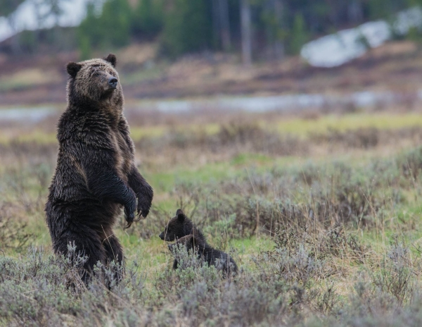 capturing the nature welcome to the yellowstone national park with angela bohlke 10 pictures 6