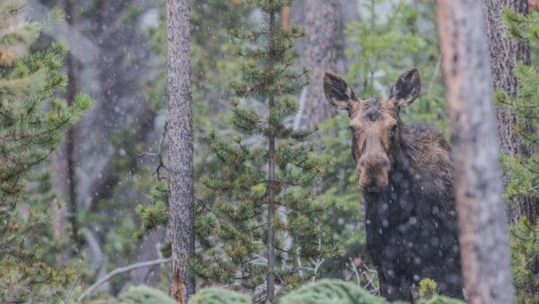 capturing the nature welcome to the yellowstone national park with angela bohlke 10 pictures 7