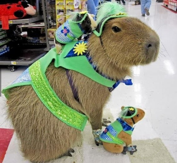 capybara definitely the biggest and possibly the cutest rodent  12 pictures 1