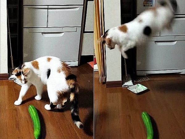 cats are cute but also a bit weird 11 pictures 11
