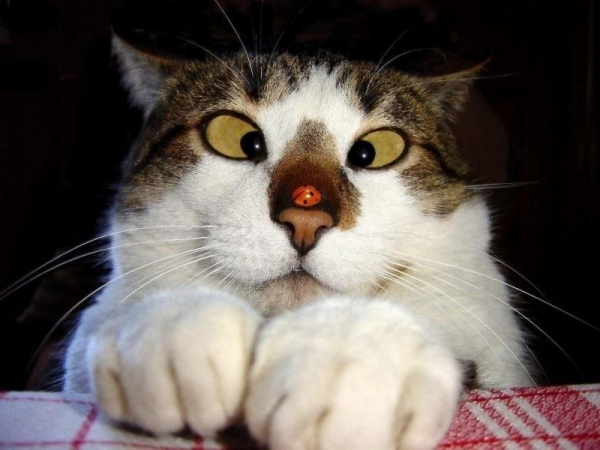 cats are cute but also a bit weird 11 pictures 2