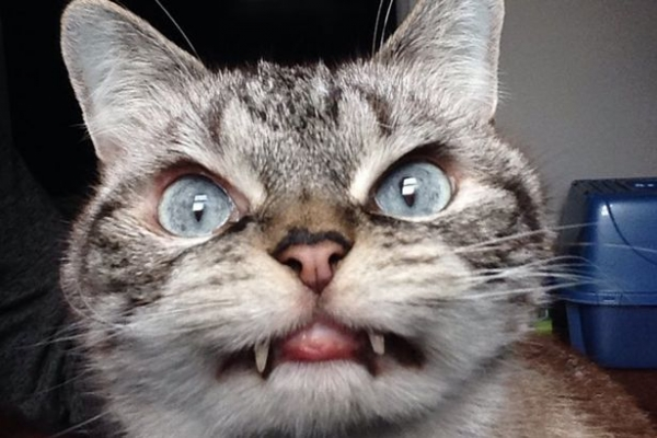 cats are cute but also a bit weird 11 pictures 3