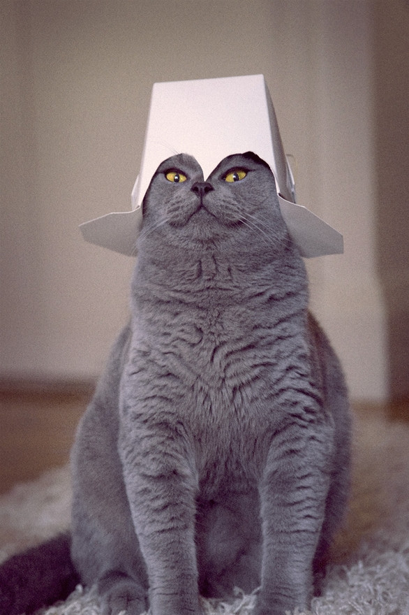 cats are cute but also a bit weird 11 pictures 4