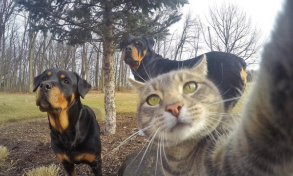 cats are cute but also a bit weird 11 pictures 6