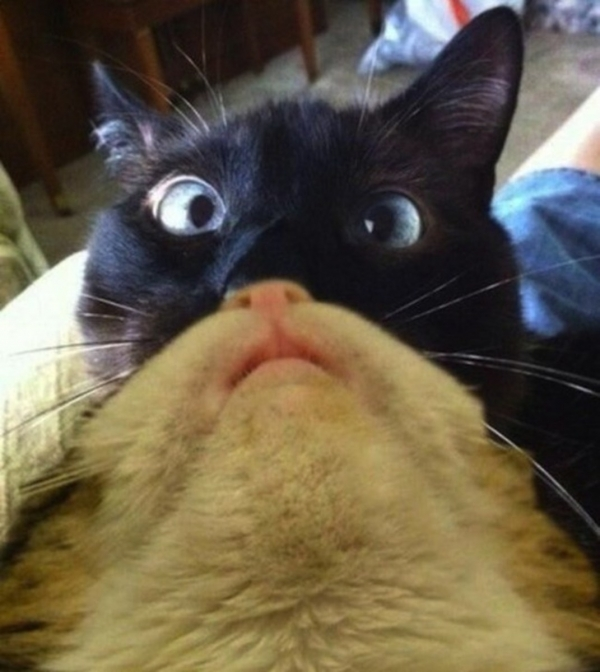 cats are cute but also a bit weird 11 pictures 8