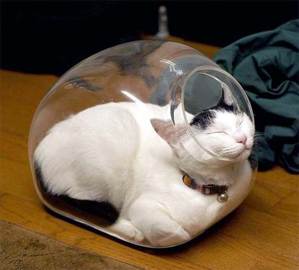 cats are cute but also a bit weird 11 pictures 9