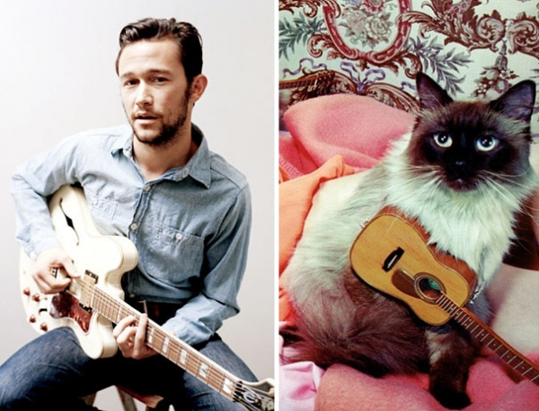 cats posing as handsome guys 21 pics 12