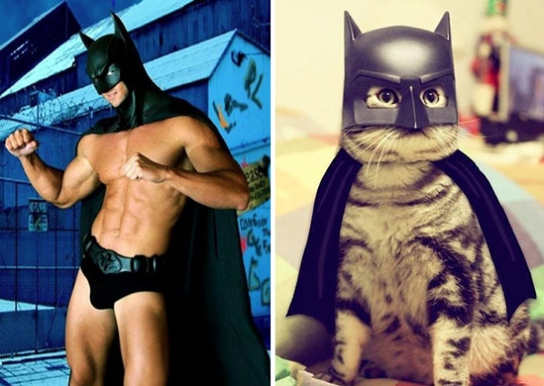 cats posing as handsome guys 21 pics 13