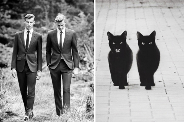 cats posing as handsome guys 21 pics 16