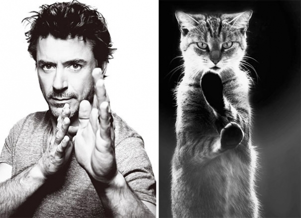 cats posing as handsome guys 21 pics 18
