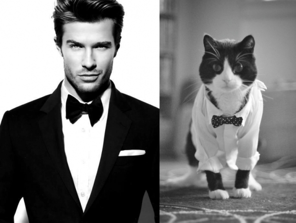 cats posing as handsome guys 21 pics 22