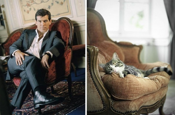 cats posing as handsome guys 21 pics 8