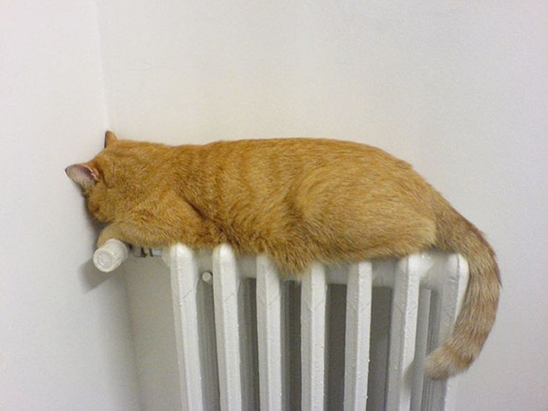 cats will love it if it is warm 12 pictures 10