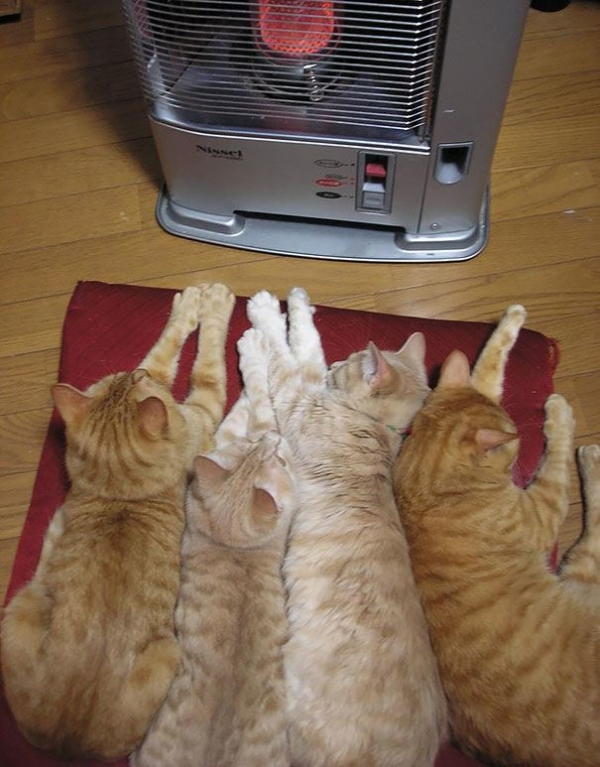 cats will love it if it is warm 12 pictures 11