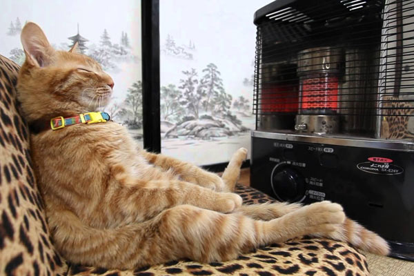 cats will love it if it is warm 12 pictures 12