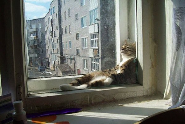 cats will love it if it is warm 12 pictures 2