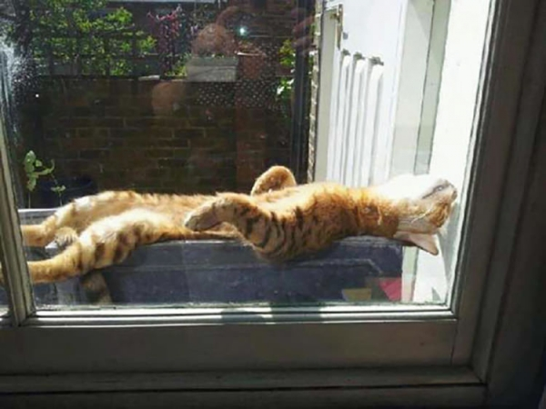 cats will love it if it is warm 12 pictures 3