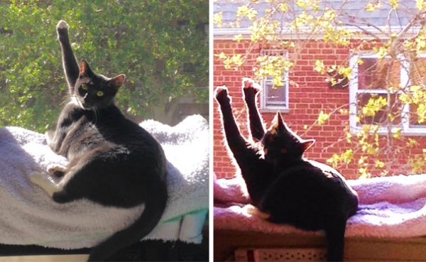 cats will love it if it is warm 12 pictures 4