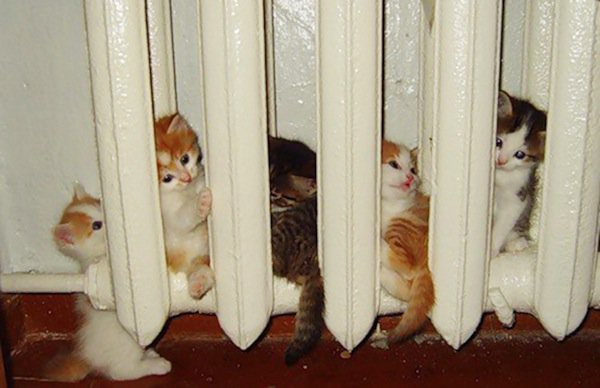 cats will love it if it is warm 12 pictures 9