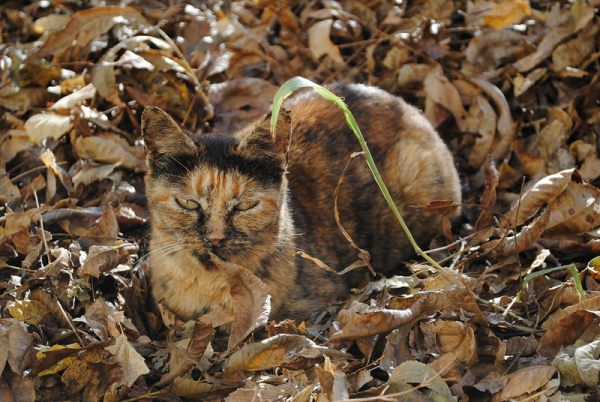 charming and witty cats  masters of camouflage  17 photos 13