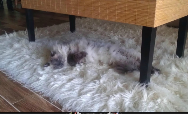 charming and witty cats  masters of camouflage  17 photos 3