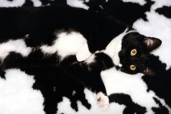 charming and witty cats  masters of camouflage  17 photos 4