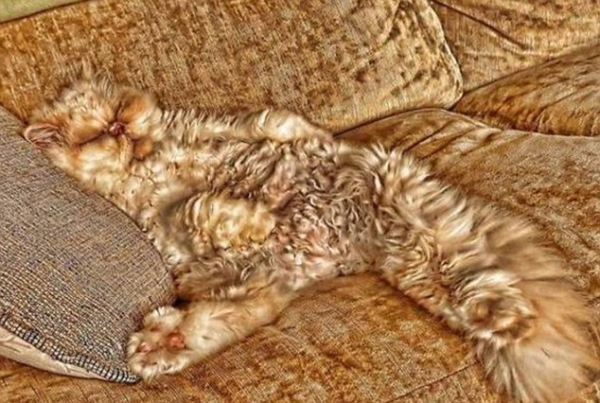 charming and witty cats  masters of camouflage  17 photos 8