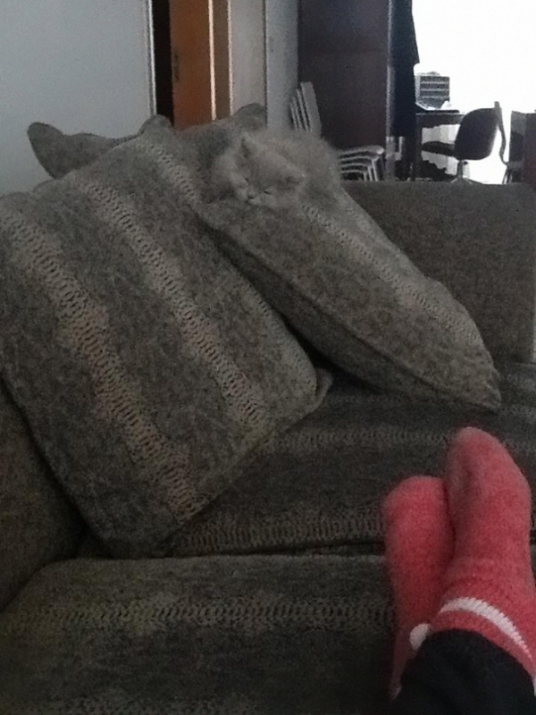 charming and witty cats  masters of camouflage  17 photos 9