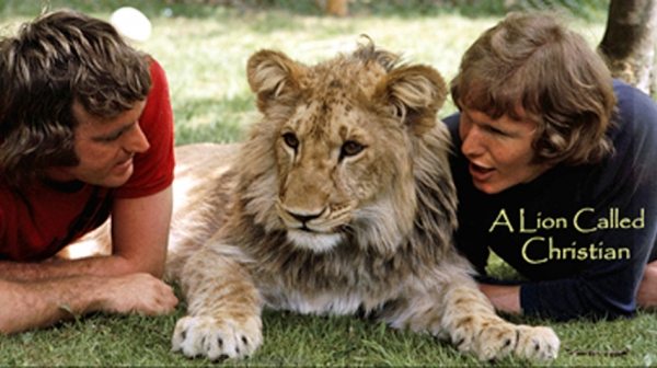 christian the lion who rode in bentley 4