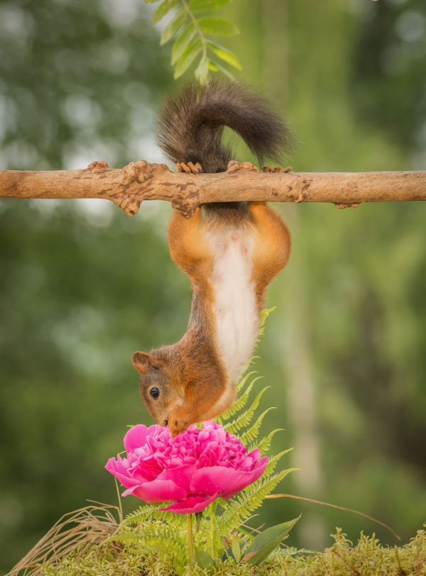 closeup on squirrels enjoying their playground 15 pictures 13