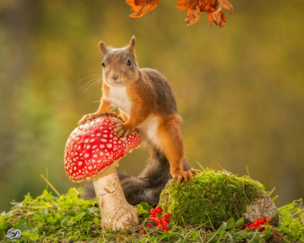 closeup on squirrels enjoying their playground 15 pictures 14