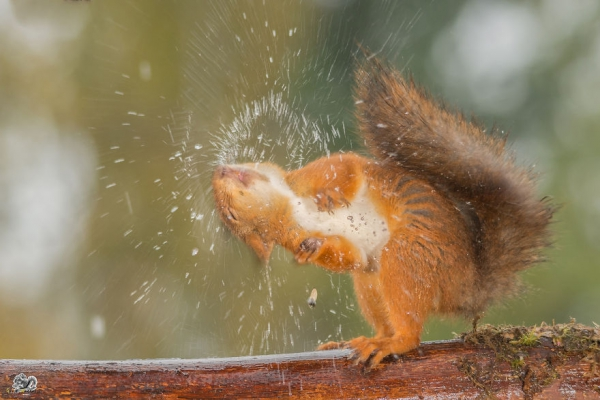 closeup on squirrels enjoying their playground 15 pictures 15