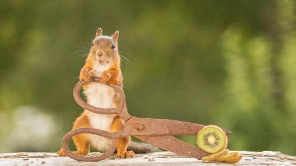 closeup on squirrels enjoying their playground 15 pictures 6