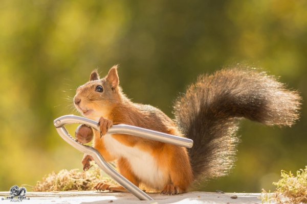 closeup on squirrels enjoying their playground 15 pictures 7